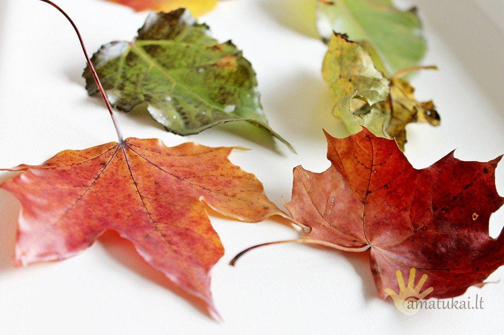 rudeniniai_lapai_ka_daryti_kad_ilgiau_isliktu